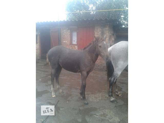 продам продам коня лошадь бу в Тернополе