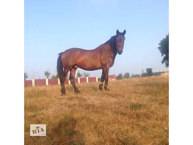 Продам коня- объявление о продаже  в Подгайцах