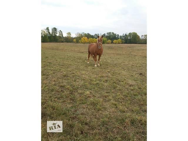 Продам коня- объявление о продаже  в Баре (Винницкой обл.)