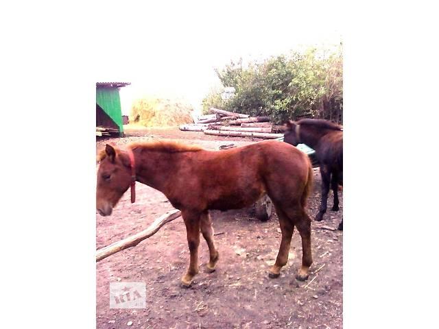 купить бу продам коня в Горохове
