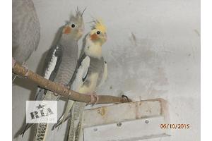 купить бу Птицы