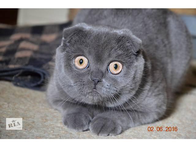 Продам кошечку- объявление о продаже  в Броварах