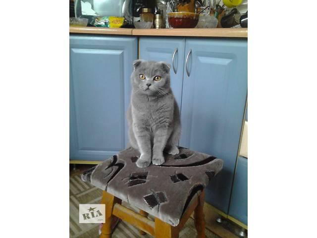 продам продам кота  бу в Полтаве