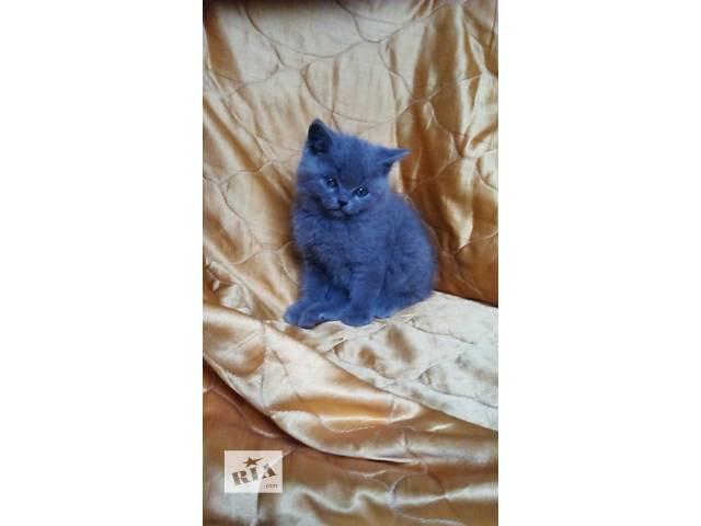 купить бу Продам котенка британца в Киеве