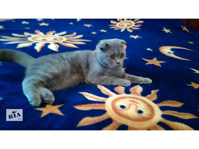 бу продам котенка, девочка 8 месяцев в Акимовке (Запорожской обл.)