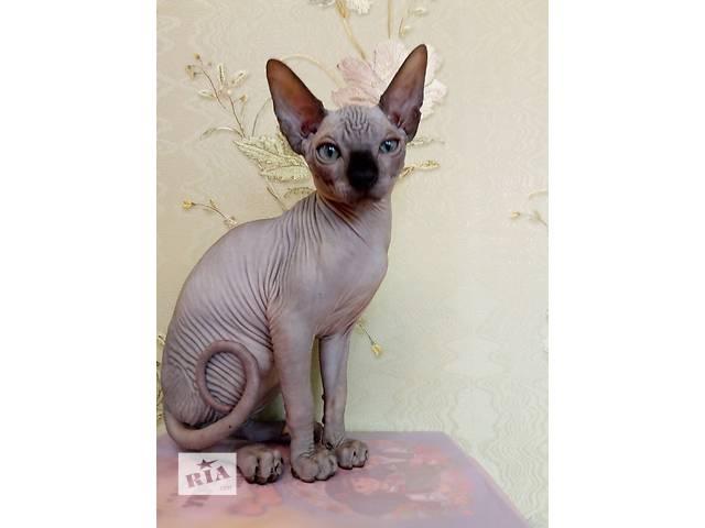 Продам котенка- объявление о продаже  в Одессе