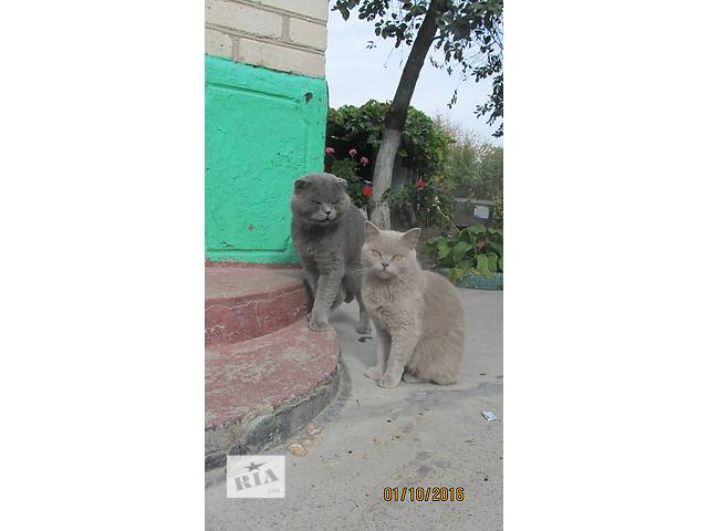 продам Продам котенят бу в Виннице