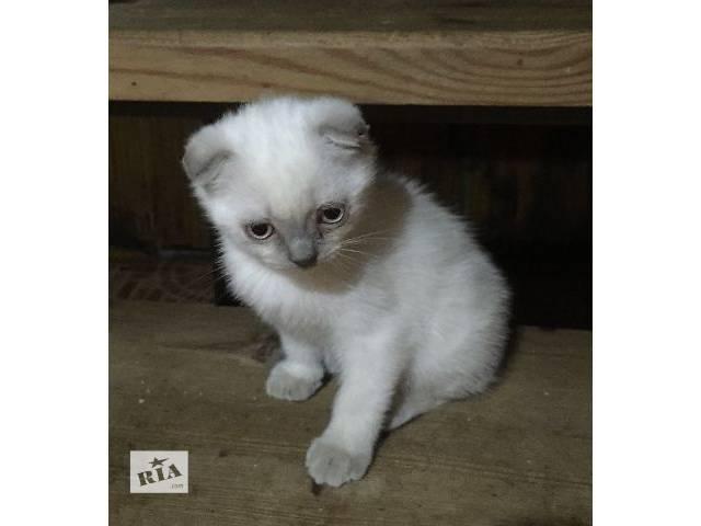 Продам котят- объявление о продаже  в Кропивницком (Кировограде)