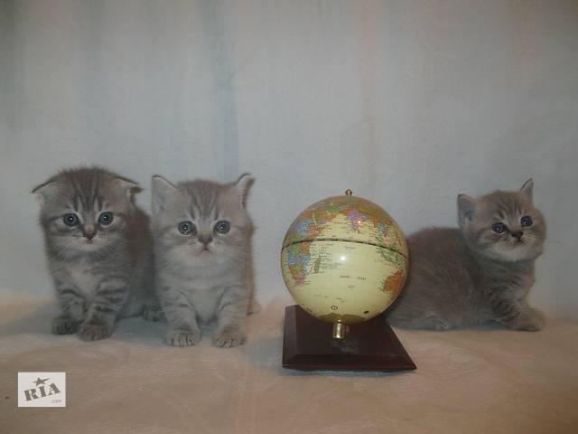 продам продам котят бу в Чернигове