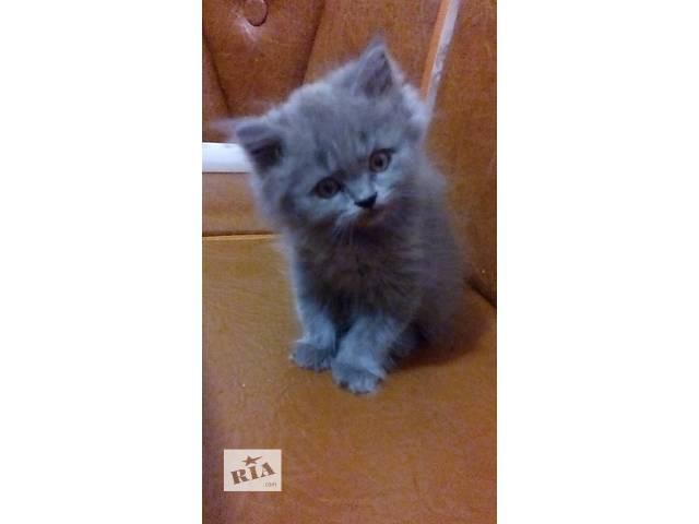 бу продам котика  в Харькове