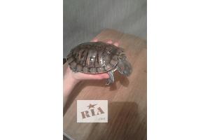 бу Черепаха Кривой Рог