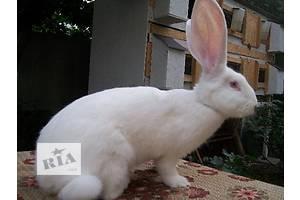 продам кролики разных пород