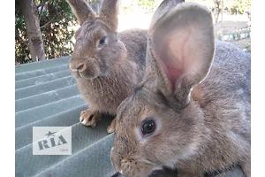 бу Кролик Вся Україна