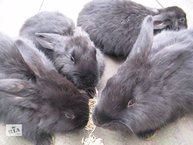 бу Продам кроликів Терміново в Виннице