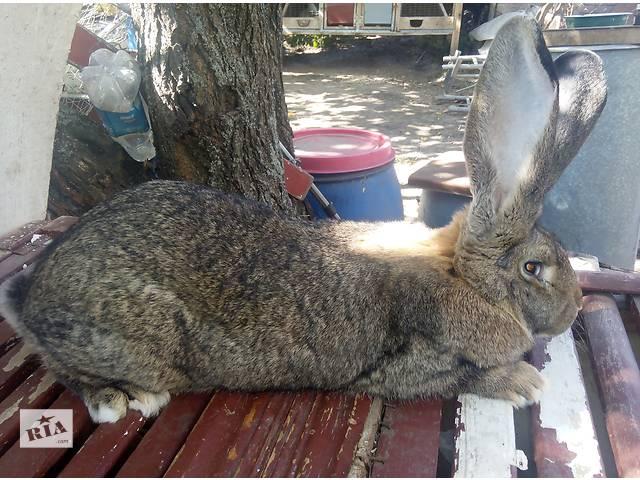 продам продам кроликов бу в Днепре (Днепропетровск)