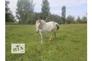 Продам лошадь (кобылу)