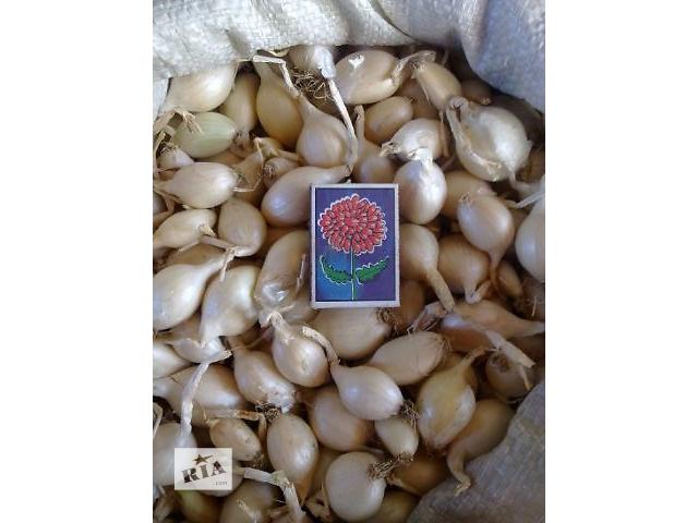 бу Продам лук кущевка(шалот)белый. в Токмаке