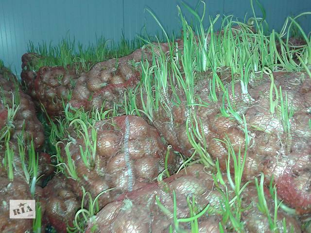 бу Продам лук на переработку и овощи в ассортименте (картофель, морковь, капуста, свекла) в Мариуполе