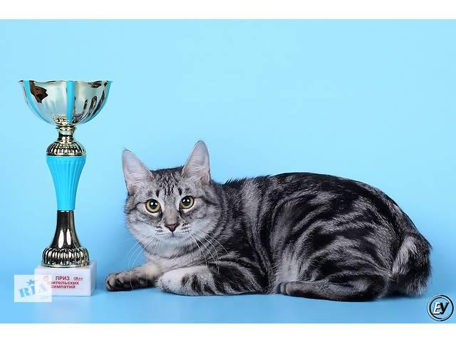 Продам молодую кошечку курильского бобтейла- объявление о продаже  в Днепре (Днепропетровск)