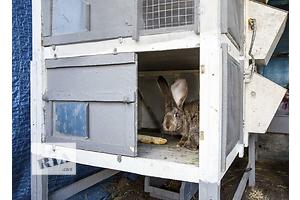 купить бу Другие животные Павлоград