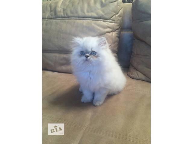 купить бу Продам персидскую кошечку! в Киеве