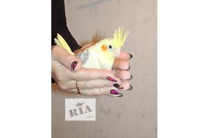 продам Попугай бу Вся Украина