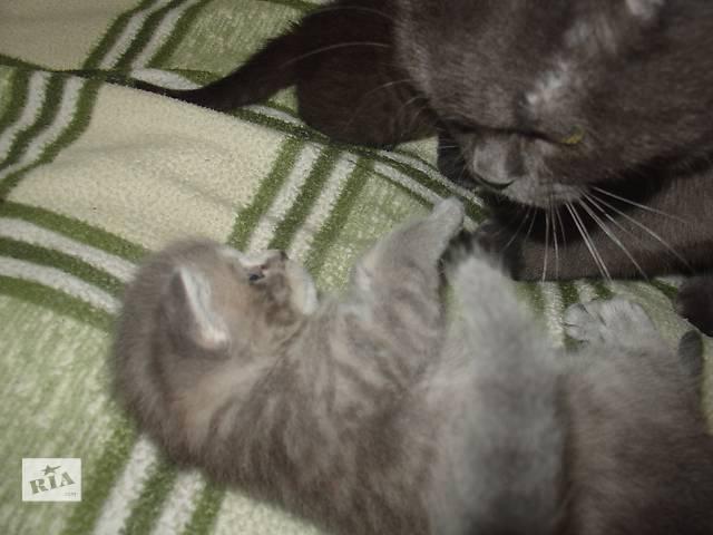 Продам(резервируем). котят- объявление о продаже  в Черкассах