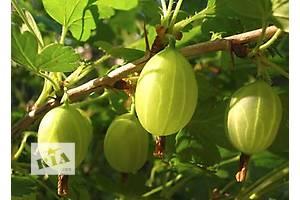 Новые Плодовые кустарники