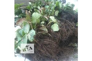 Новые Садовые растения