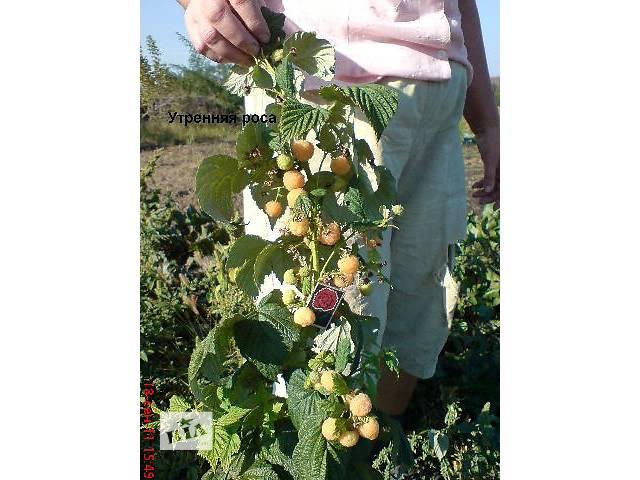 Продам саженцы крупноплодной малины и клубники.Высылаю по территории Украины- объявление о продаже  в Запорожье