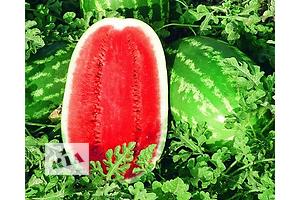 Новые Семена овощей