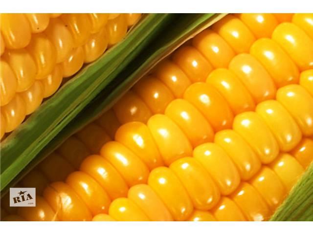 Продам семена кукурузы Украинской и зарубежной селекций- объявление о продаже  в Синельниково