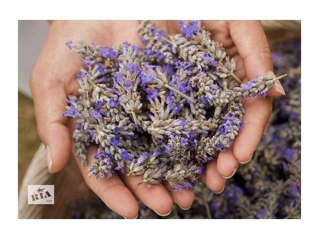 продам Продам семена Лаванды бу в Запорожье