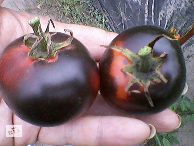 купить бу Продам семена сортовых томатов (полосатые, 2-цветные, синие, белые, зеленые, шоколадные, красные, розовые и др. в Харькове