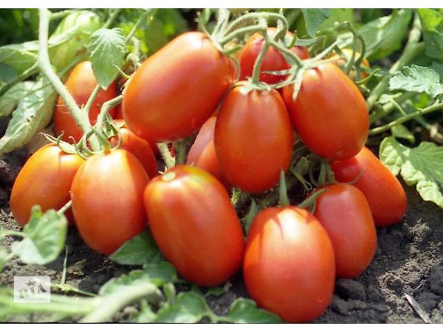 продам Продам семена Томат Рио Гранде (Sais Италия) бу в Харькове