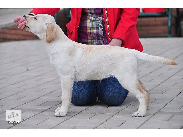 Собаки, щенки, луганск и область, луганск