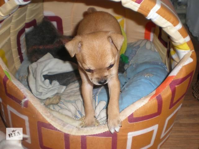 купить бу продам щенков в Покрове (Орджоникидзе)