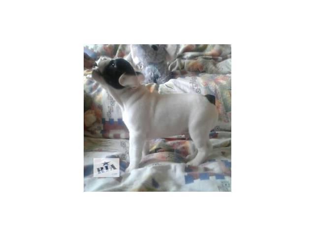 продам щенков- объявление о продаже  в Запорожье