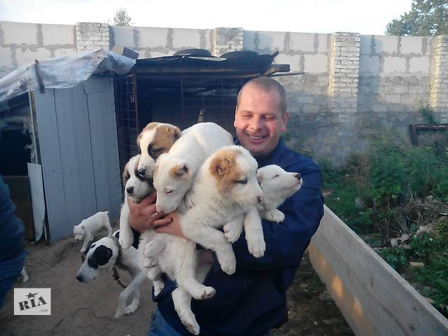 купить бу Продам щенят в Новояворовске