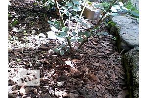 купить бу Комнатные растения, рассада и цветы в Днепропетровске Вся Украина