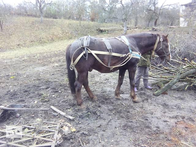 Продам большого , спокойного , рабочего коня- объявление о продаже  в Остроге