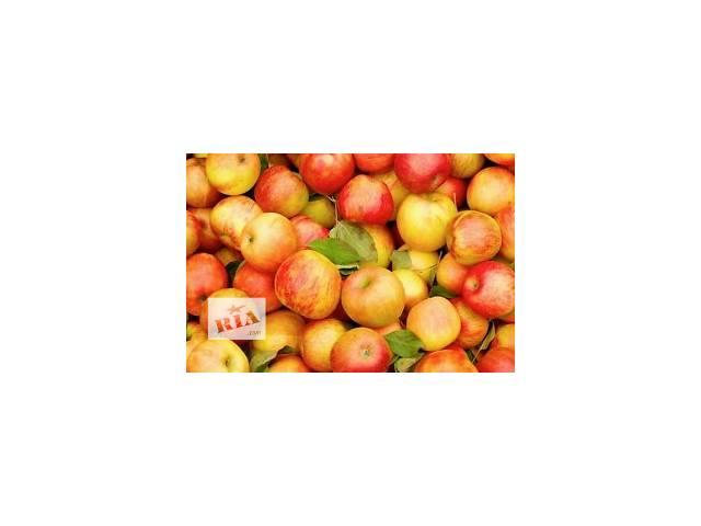 Продам яблука- объявление о продаже  в Хмельницком