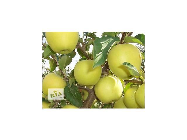 купить бу Продам яблука в Баре (Винницкой обл.)