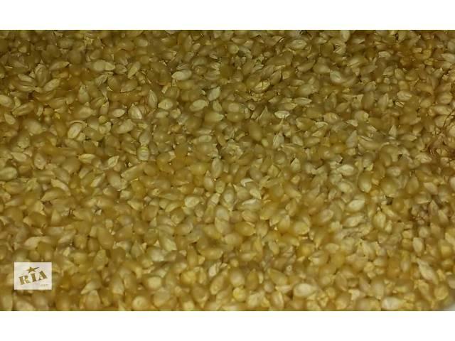 продам Продам зерно кукурузы для попкорна! бу в Одессе