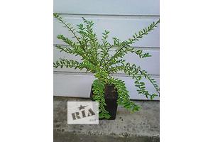 бу Комнатные растения, рассада и цветы в Днепропетровске Вся Украина
