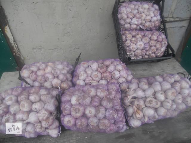 продам зимний чеснок- объявление о продаже  в Каменке-Бугской