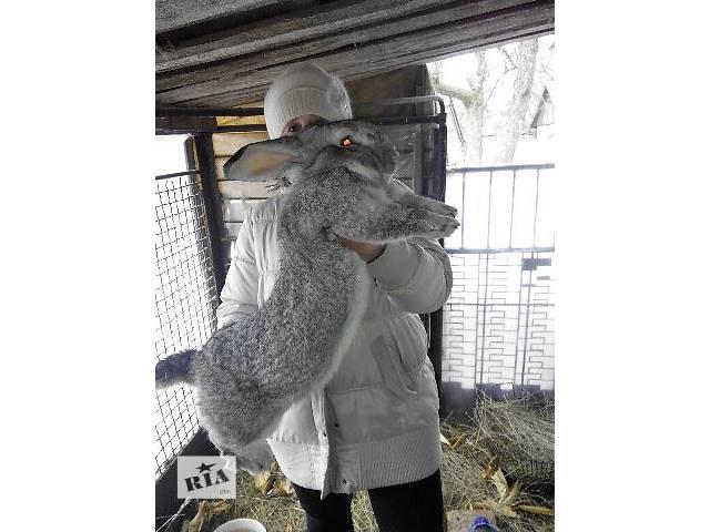 продам Продам кроликов =)))) бу в Запорожье