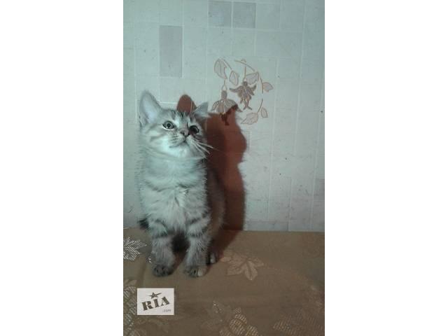 продам продаю котят бу в Киеве