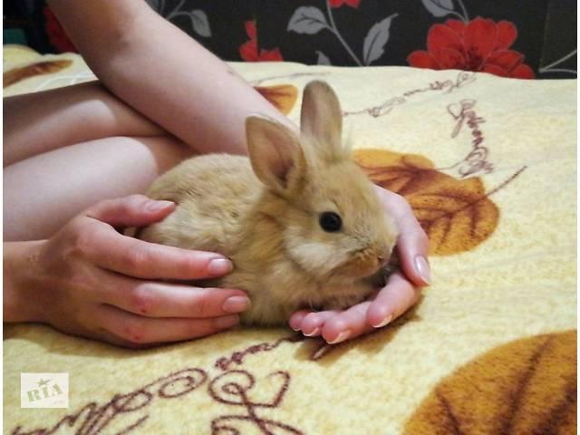продам Продаю кролика вместе с клеткой и всем оборудованием бу в Хмельницком