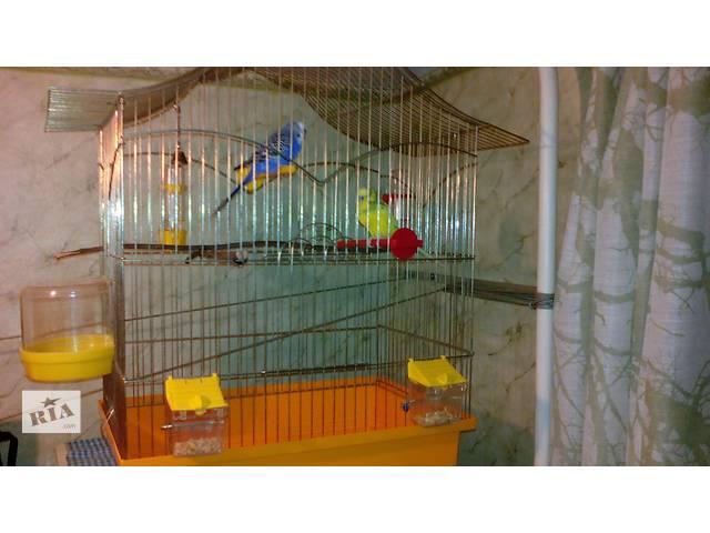 купить бу продаю попугаев с клеткой в Николаеве
